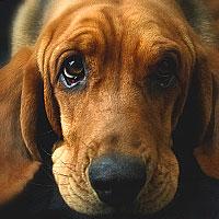 Собака во сне к чему снится (толкование по соннику Магини)
