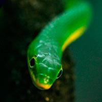 Змея во сне к чему снится