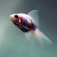 Рыба во сне к чему снится (самый правдивый сонник)
