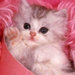 Толкование снов о котятах