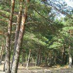 Толкование снов с лесом