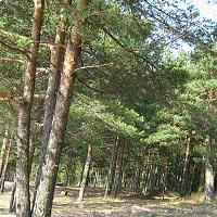 Лес во сне к чему снится (толкование по соннику Магини)