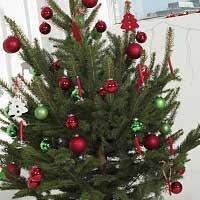 Волшебство елки: новогодние ритуалы