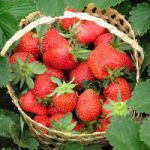 Толкование снов с ягодами