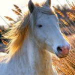 Зороастрийский тотем Конь