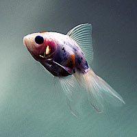 Толкование снов с рыбами