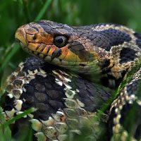 Зороастрийский тотем Змея