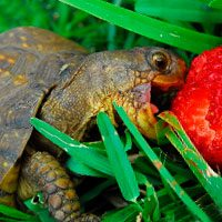 Зороастрийский тотем Черепаха