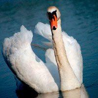 Зороастрийский тотем Лебедь
