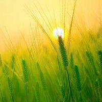 Обряды на исполнение желания: способы для утра