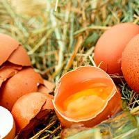 Гадание на куриных яйцах на будущее