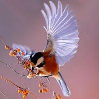 Птичьи приметы