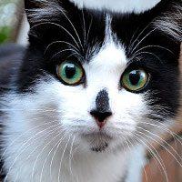 Толкование снов с кошками